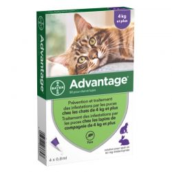 Advantage 80  Chat de plus de 4 kg - 4 pipettes