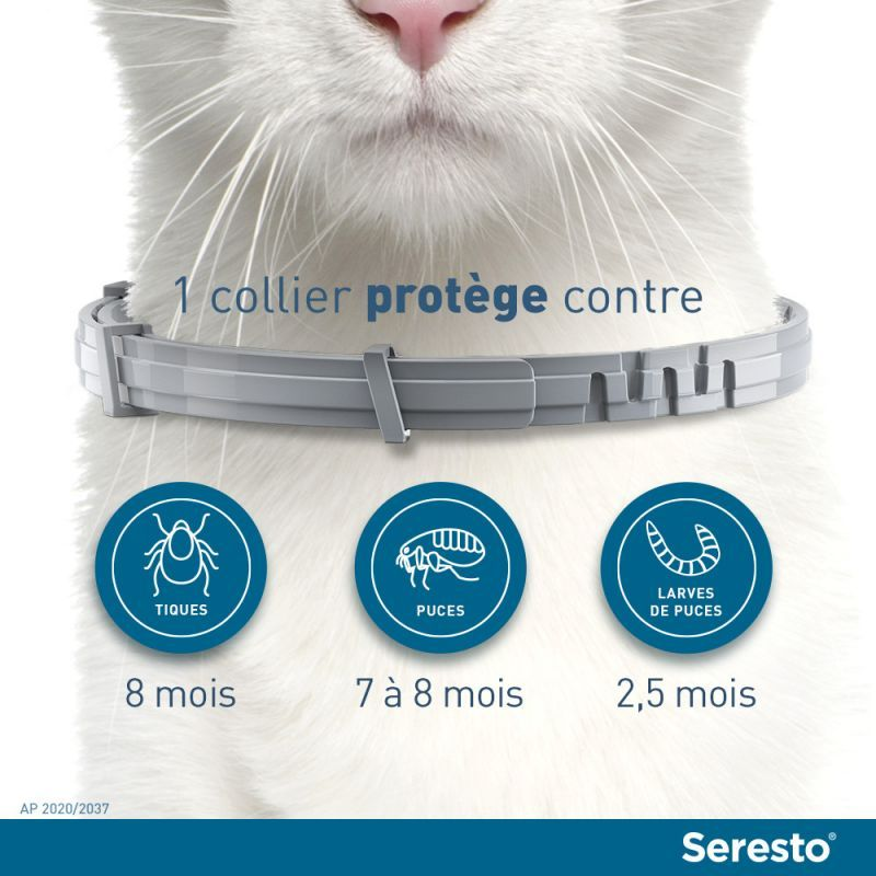 protection collier Seresto pour chats